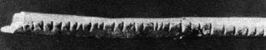 The Lebombo Bone: First evidence of mathematics